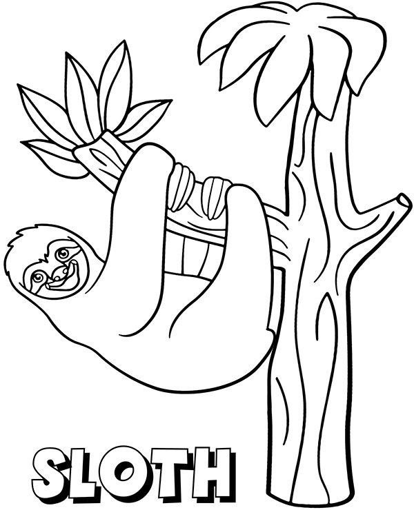 sloth pictures to print sloth coloring download sloth coloring for free 2019 sloth to pictures print