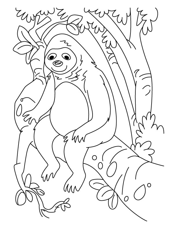 sloth pictures to print sloth coloring pages get some leaves for food free to pictures sloth print