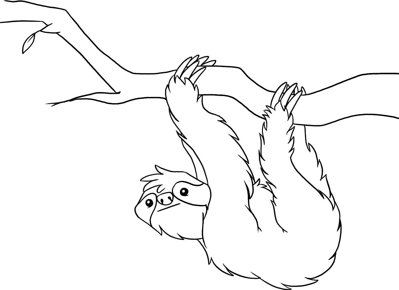 sloth pictures to print sloth coloring pages line art free printable coloring pages to pictures sloth print