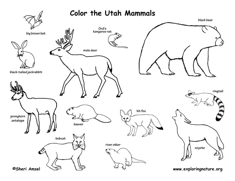 small printable pictures of animals print download teaching kids through elephant coloring pictures animals printable small of