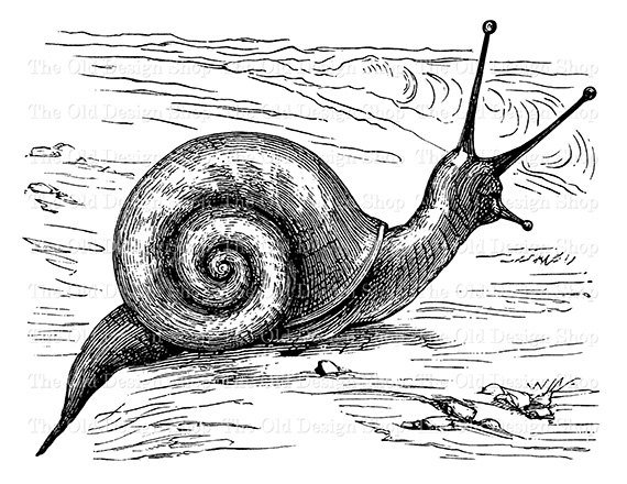 snail drawing how to draw a cartoon snail draw central drawing snail