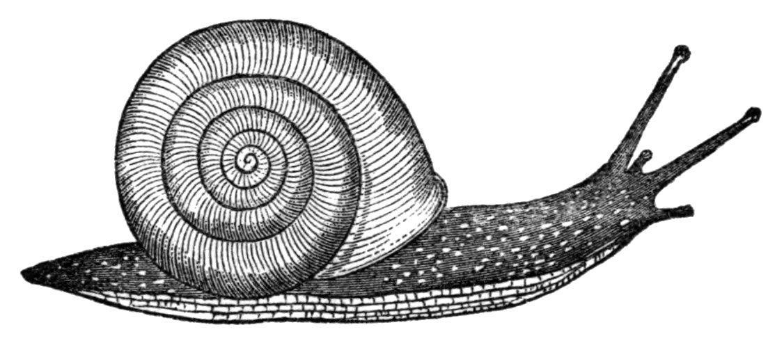 snail drawing how to draw snails with simple step by step drawing drawing snail