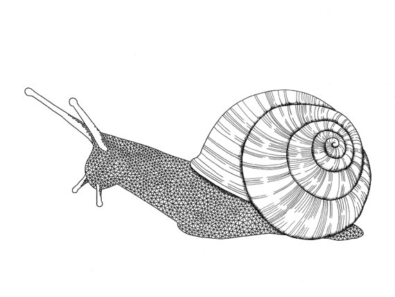 snail drawing snail clipart black and white free download on clipartmag drawing snail
