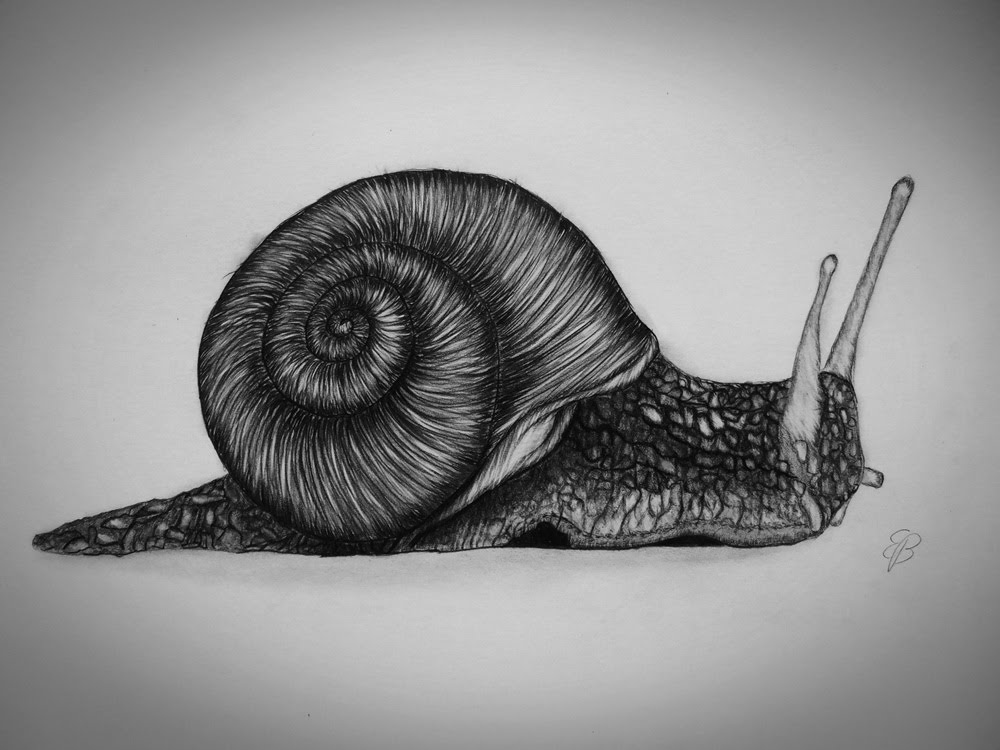 snail drawing snail drawing clipartsco drawing snail