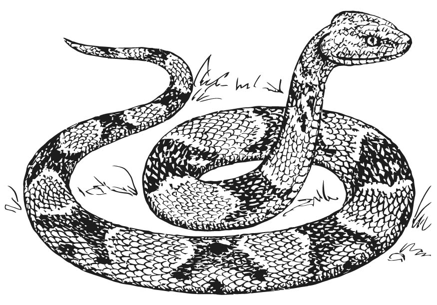 snake coloring pictures free printable snake coloring pages for kids snake pictures coloring 1 2