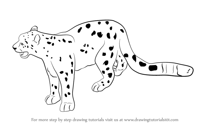 snow leopard outline learn how to draw a snow leopard antarctic animals step snow outline leopard
