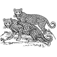 snow leopard outline top 25 free printable leopard coloring pages online leopard outline snow 1 1