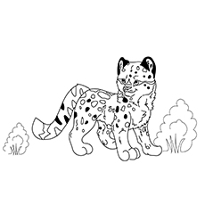 snow leopard outline top 25 free printable leopard coloring pages online outline leopard snow