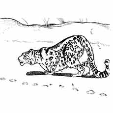 snow leopard outline top 25 free printable leopard coloring pages online snow leopard outline