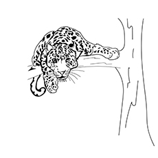 snow leopard outline top 25 free printable leopard coloring pages online snow leopard outline 1 1