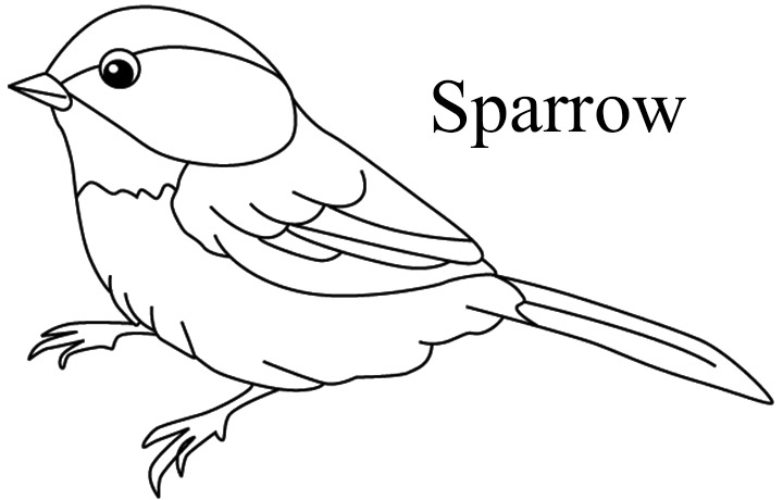 sparrow coloring page sparrow coloring pages coloring home sparrow page coloring