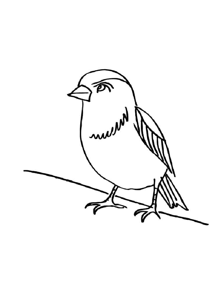 sparrow coloring page sparrow coloring pages coloring pages to download and print page coloring sparrow