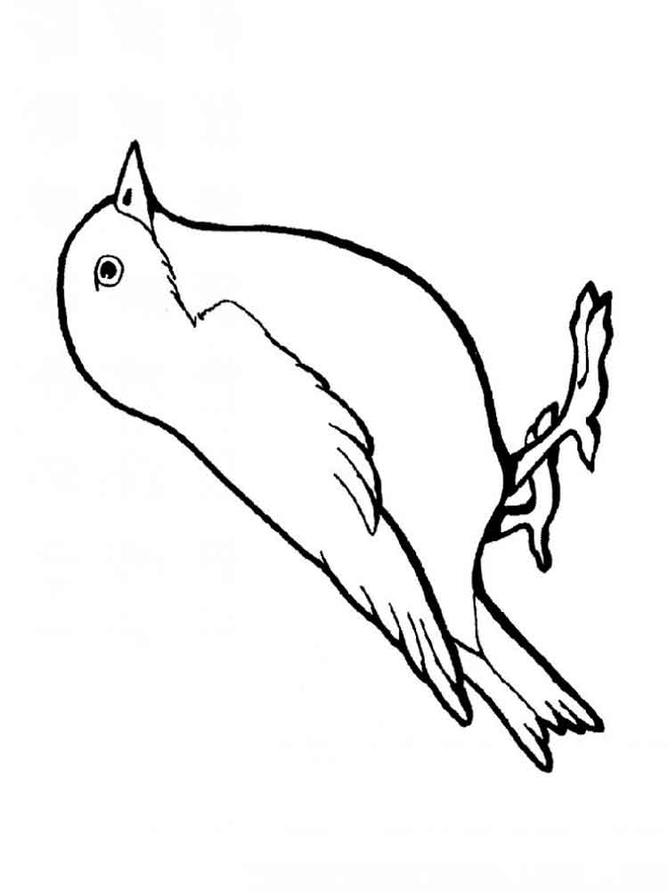 sparrow coloring page sparrow coloring pages coloring pages to download and print page coloring sparrow 1 1
