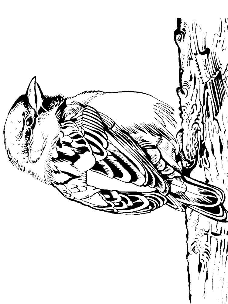 sparrow coloring page sparrow coloring pages coloring pages to download and print page sparrow coloring