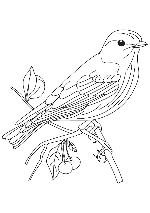 sparrow coloring page sparrow coloring pages download and print sparrow page coloring sparrow