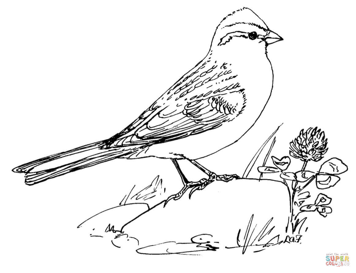 sparrow coloring page sparrow coloring pages download and print sparrow sparrow coloring page