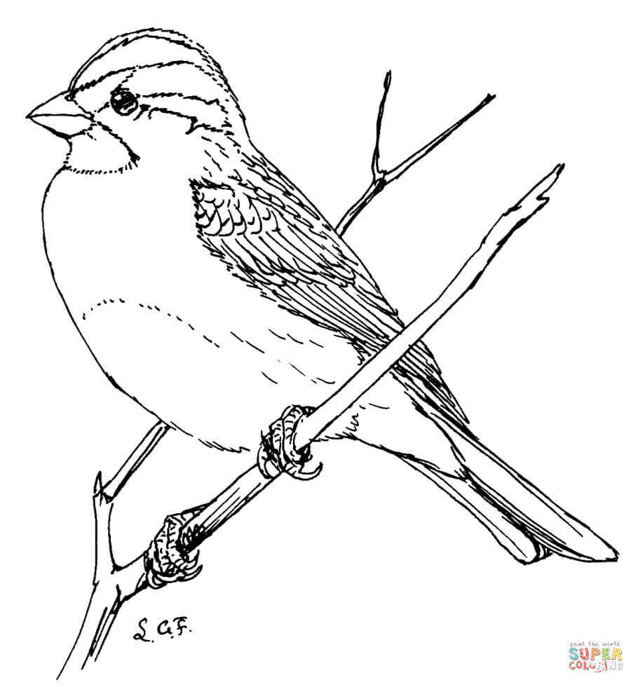 sparrow coloring page sparrow coloring pages download and print sparrow sparrow coloring page 1 1