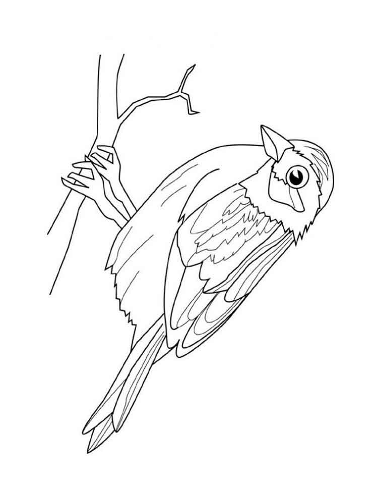 sparrow coloring page sparrow coloring pages download and print sparrow sparrow coloring page 1 2