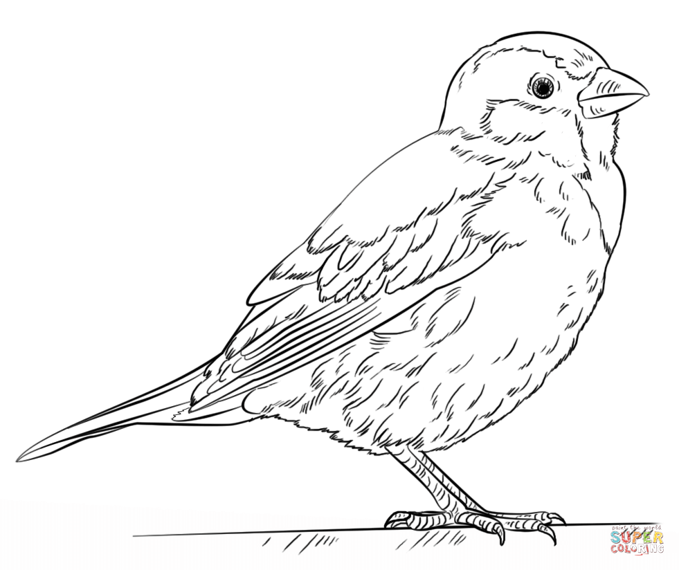 sparrow coloring page sparrow coloring pages to download and print for free coloring page sparrow