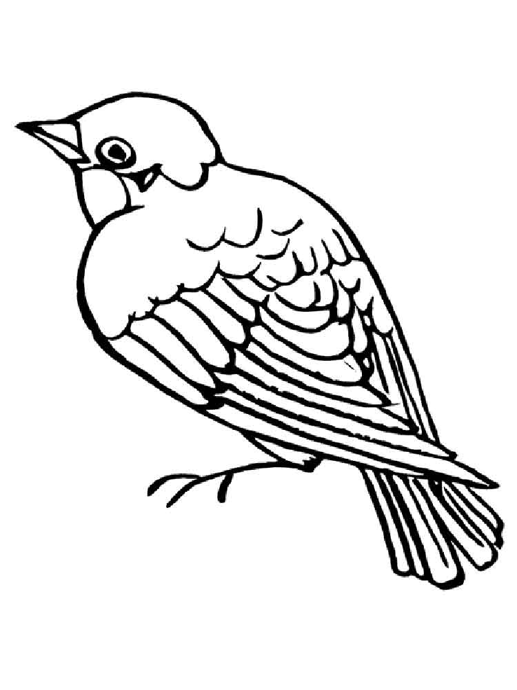 sparrow coloring page sparrow coloring pages to download and print for free page coloring sparrow