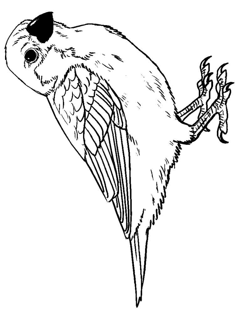 sparrow coloring page sparrow sitting on bough coloring page free printable sparrow coloring page