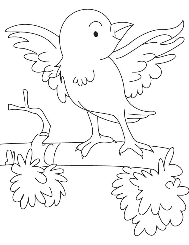 sparrow coloring page the best free sparrow coloring page images download from sparrow page coloring