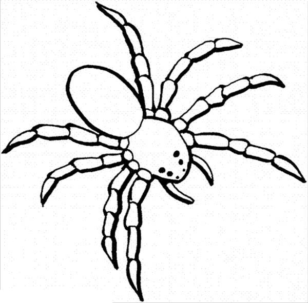 spider coloring book dangerous spider coloring page netart coloring spider book
