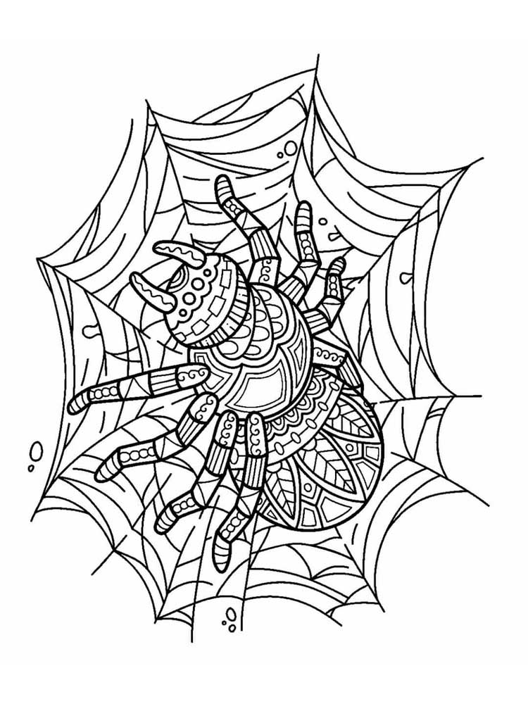 spider coloring book free spider coloring pages for adults printable to book coloring spider