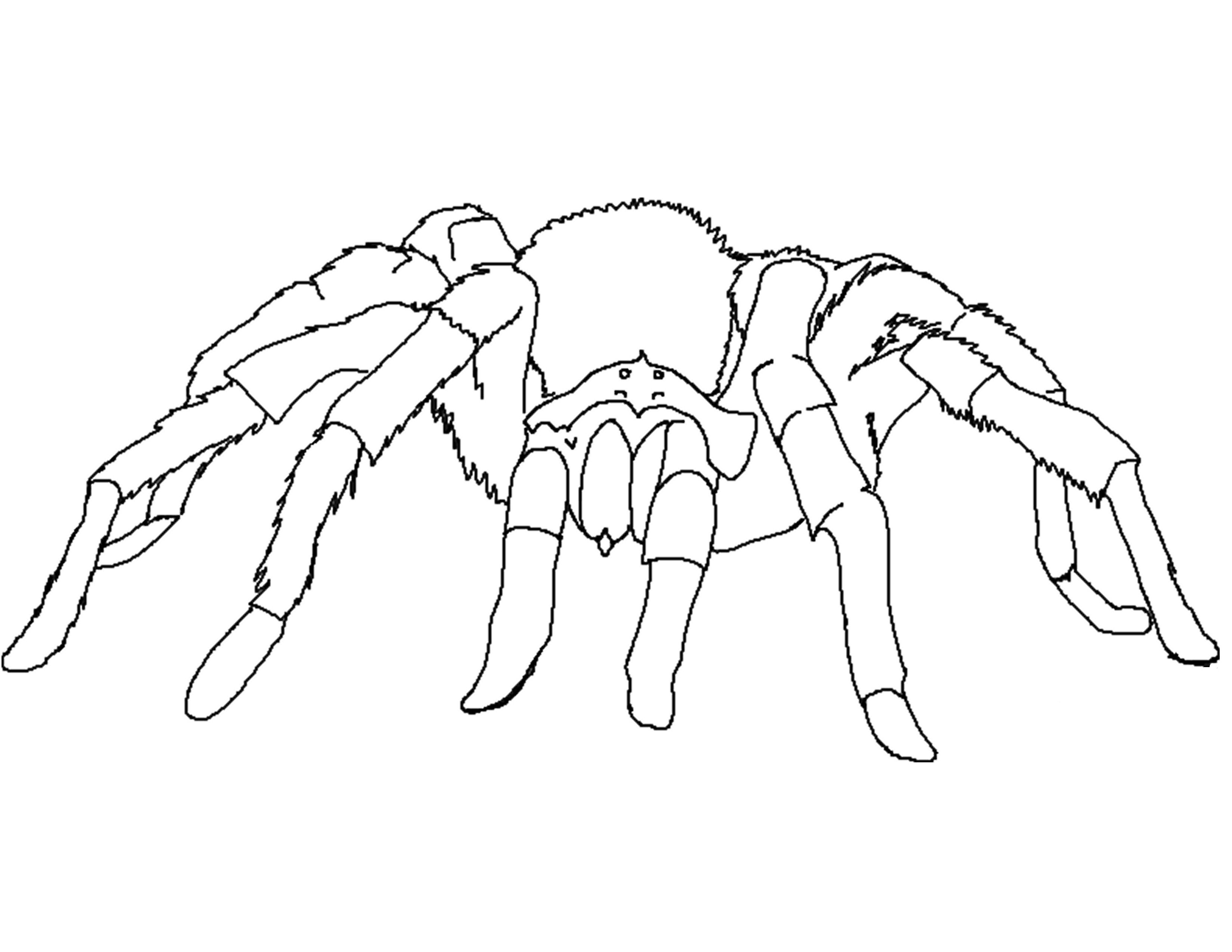 spider coloring book spider coloring pages kidsuki book coloring spider
