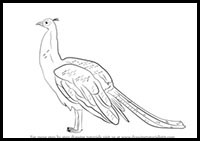 step by step how to draw a peacock how to draw a peacock a how step peacock by to step draw