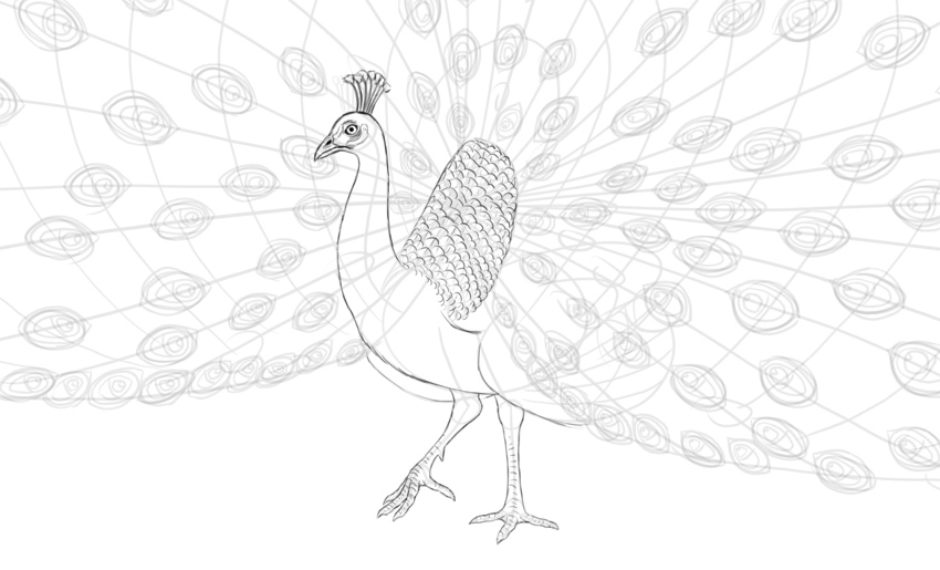 step by step how to draw a peacock how to draw a peacock step a draw by to how peacock step