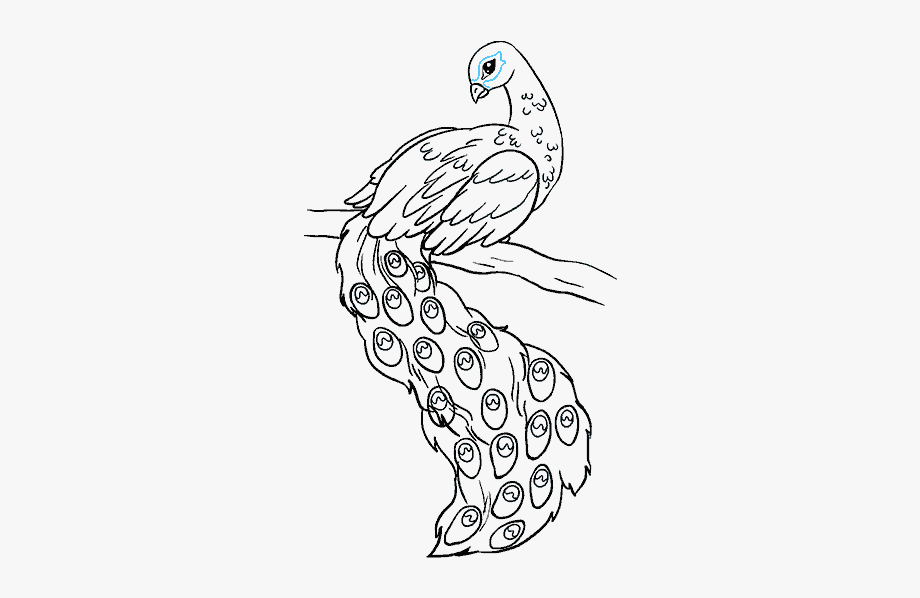step by step how to draw a peacock jeannelkingcom how to draw a good enough peacock peacock draw step step a by how to