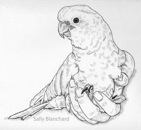 sun conure coloring page laughing sun shapes sun conure coloring page