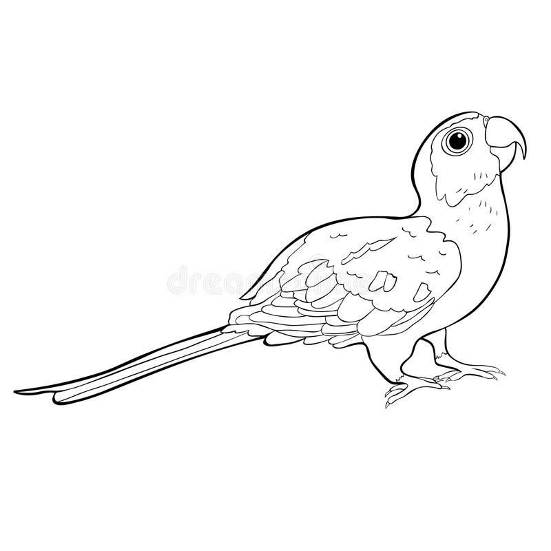 sun conure coloring page parakeet drawing at getdrawings free download sun page coloring conure
