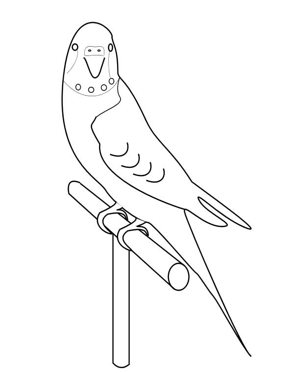 sun conure coloring page scarlet macaw conure sun coloring page