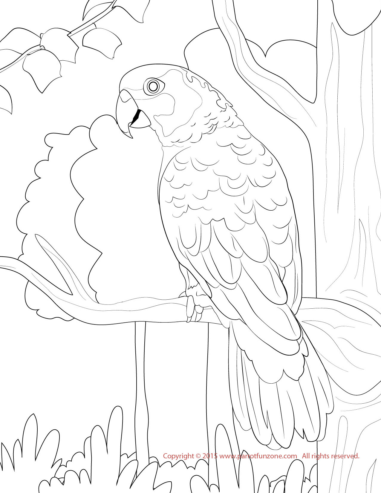 sun conure coloring page sun conure drawing at getdrawings free download coloring sun page conure