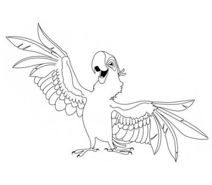 sun conure coloring page sun conure drawing at getdrawings free download conure coloring page sun