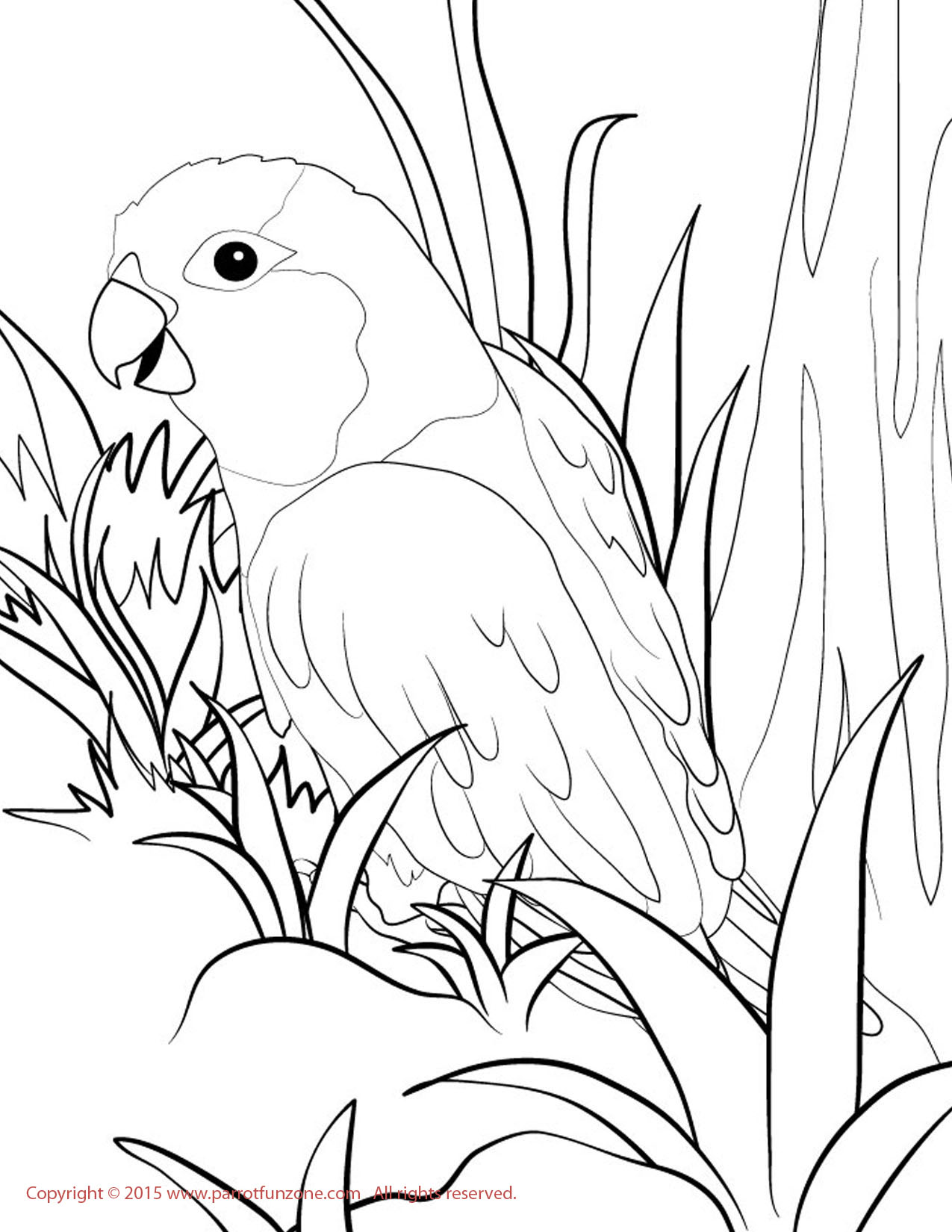 sun conure coloring page sun conure drawing at getdrawings free download conure coloring sun page