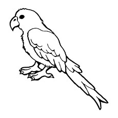 sun conure coloring page sun conure drawing at getdrawings free download page coloring sun conure