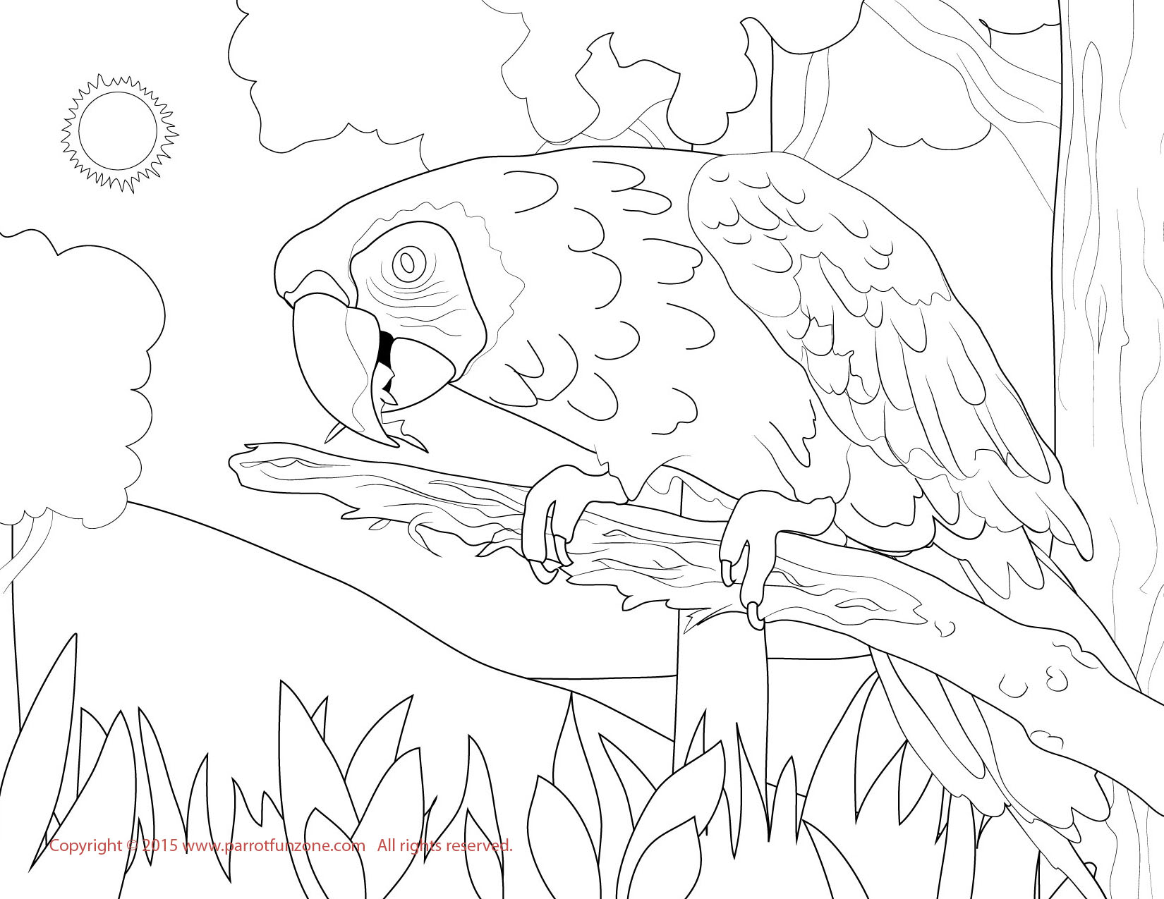 sun conure coloring page sun conure drawing at getdrawings free download sun conure page coloring