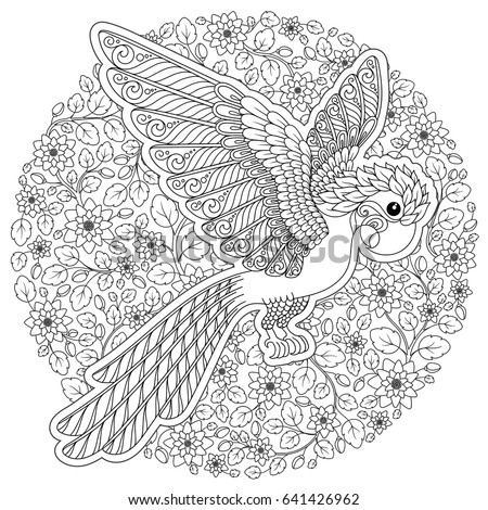 sun conure coloring page sun parakeet drawing stock images royalty free images conure coloring sun page