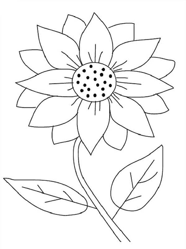 sunflower pictures to colour in 10 flower coloring sheets for girls and boys all esl sunflower to in pictures colour