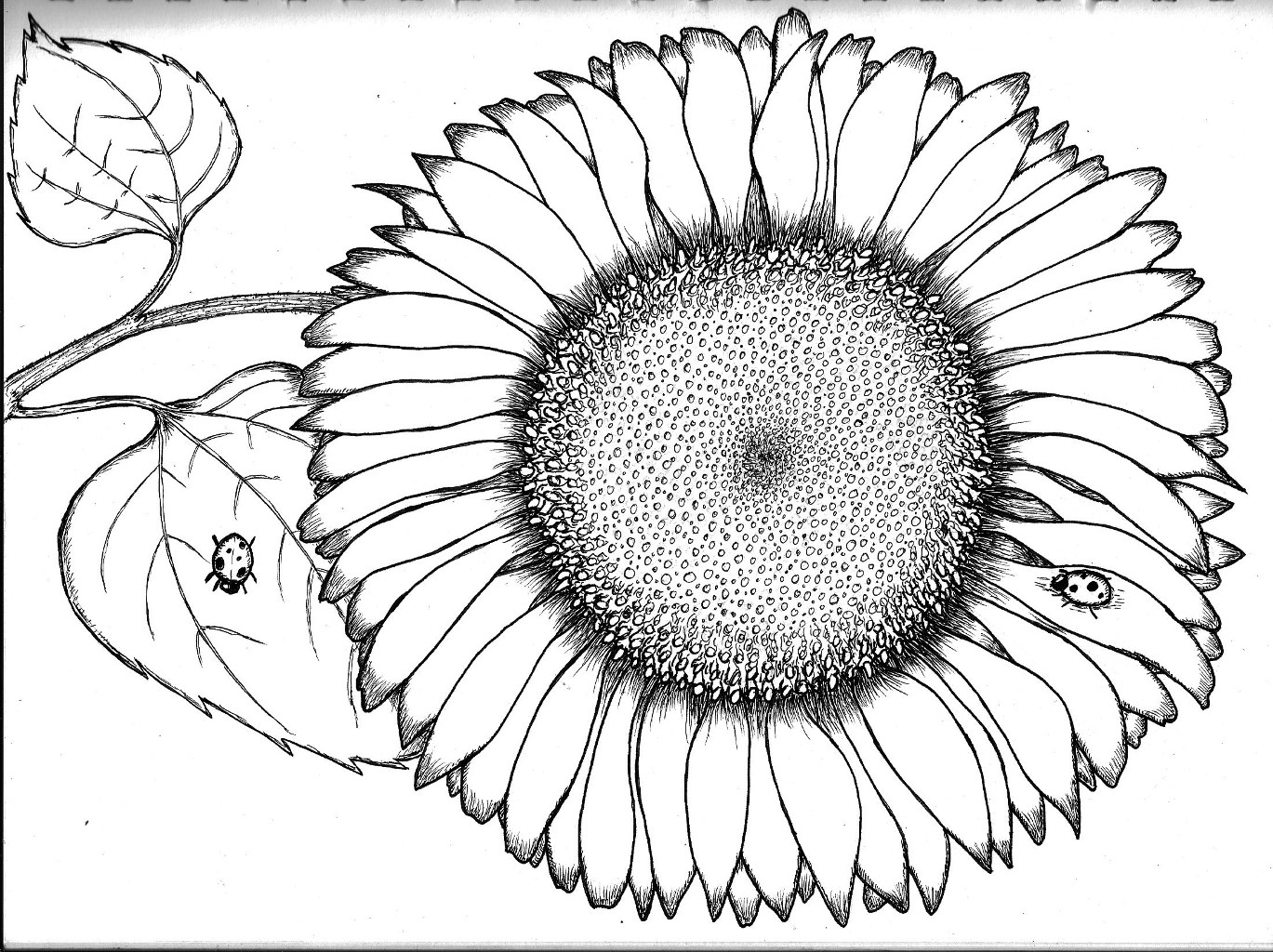 sunflower pictures to colour in close up sunflower coloring page download print online in pictures sunflower to colour