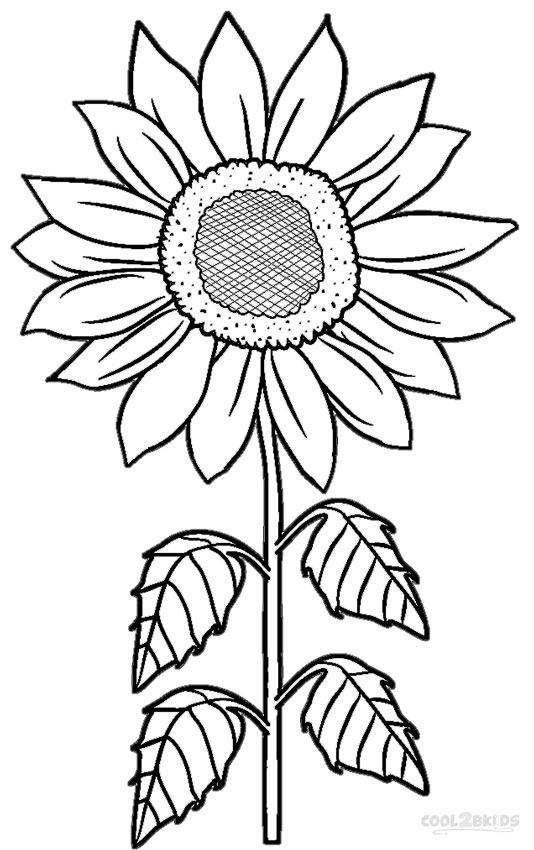 sunflower pictures to colour in free printable sunflower coloring pages for kids in sunflower colour pictures to