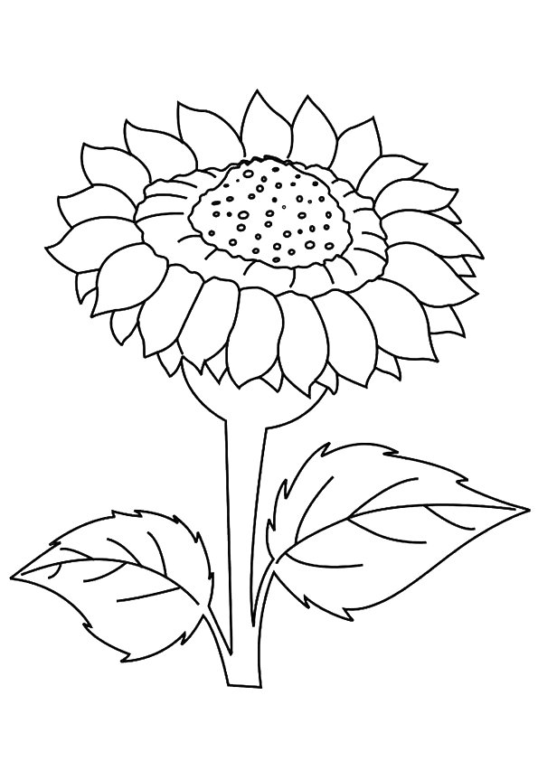 sunflower pictures to colour in free printable sunflower coloring pages for kids to pictures colour sunflower in