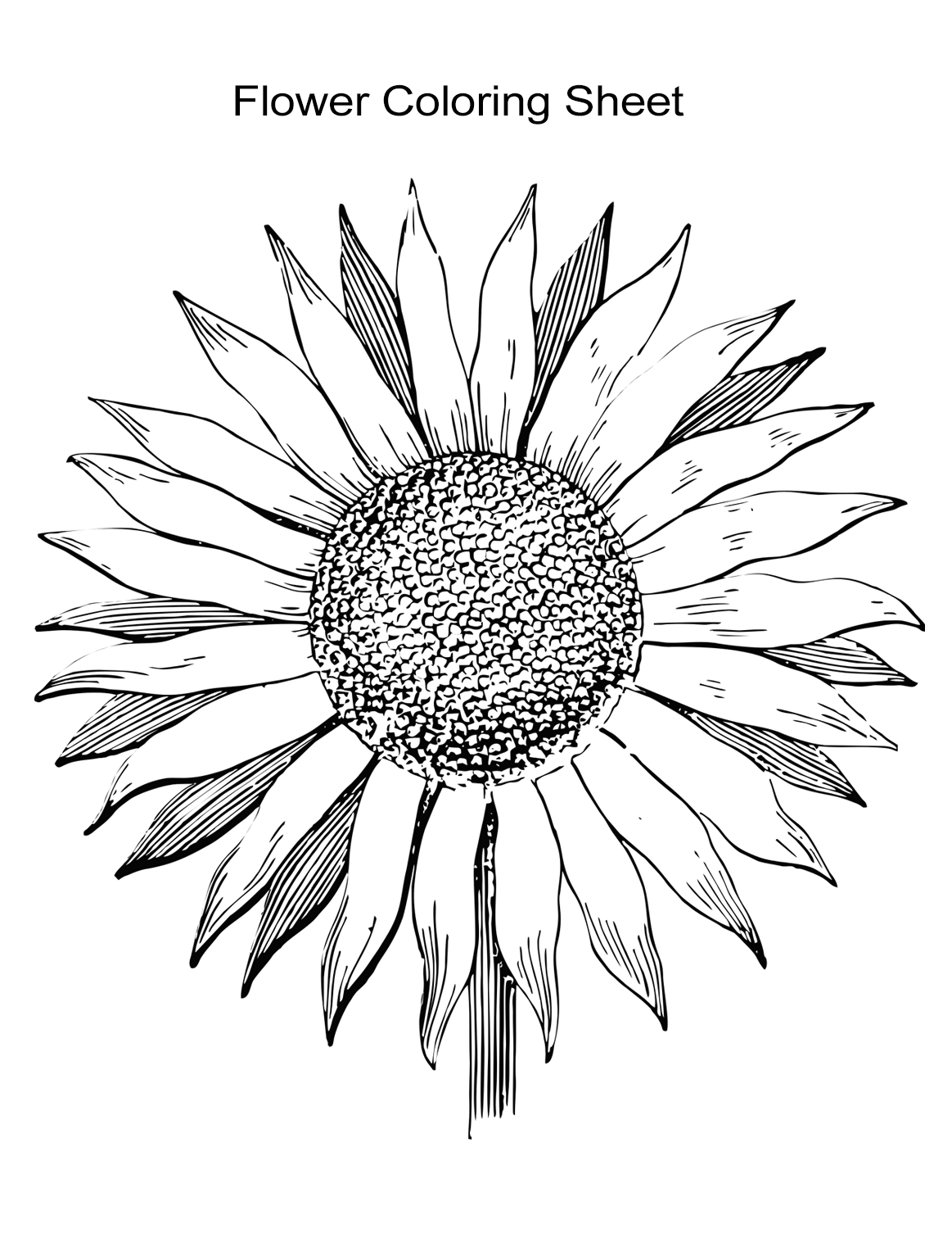 sunflower pictures to colour in free sunflower color sheets download free clip art free colour sunflower in to pictures