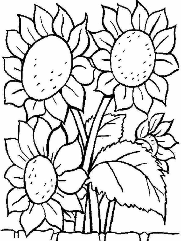 sunflower pictures to colour in free sunflower coloring page in colour pictures sunflower to
