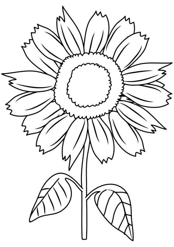 sunflower pictures to colour in sunflower coloring page at getdrawings free download pictures in colour sunflower to