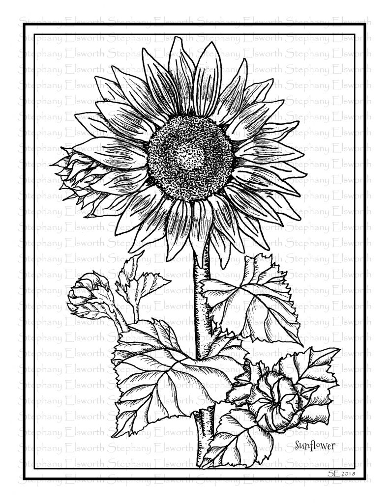 sunflower pictures to colour in sunflowers 8 12 x 11 printable coloring page color with colour sunflower in to pictures