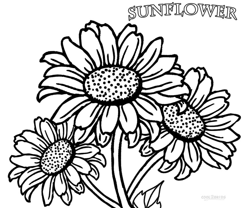 sunflower pictures to colour in the sunflower is yellow coloring page twisty noodle in pictures sunflower colour to